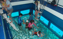 aquarium pool